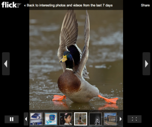 Flickr slideshow using EmbedWidget